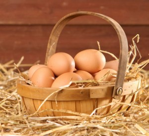 Free range freshly laid eggs in a straw barn setting
